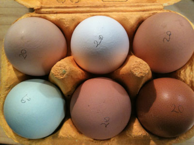 Boxful of Smallholding eggs