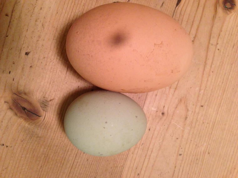 What a whopper! The giant egg dwarfs Mabel's pale khaki number