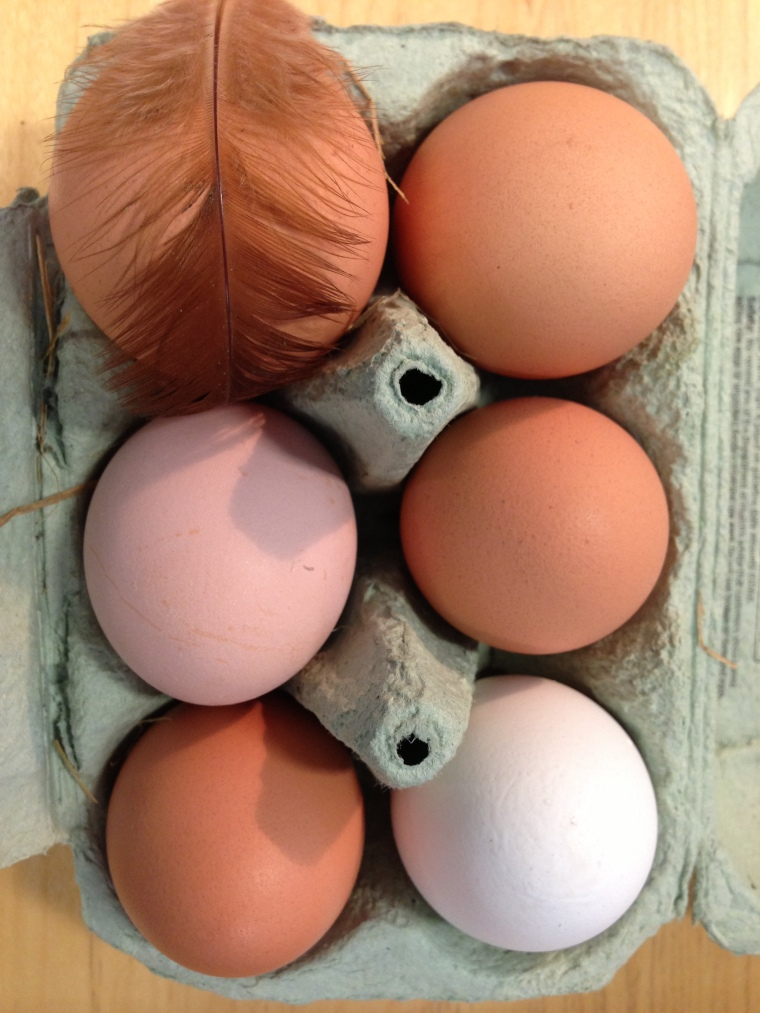 I kept the feather from our broody Rhode Island Red in Chris's box of eggs today -