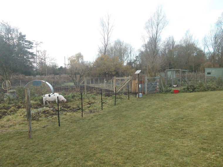 Since we extended the pig run, the place is beginning to resemble a proper, albeit tiny, smallholding