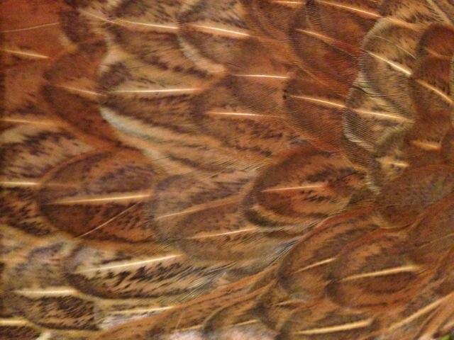 Mabel had stunning plumage