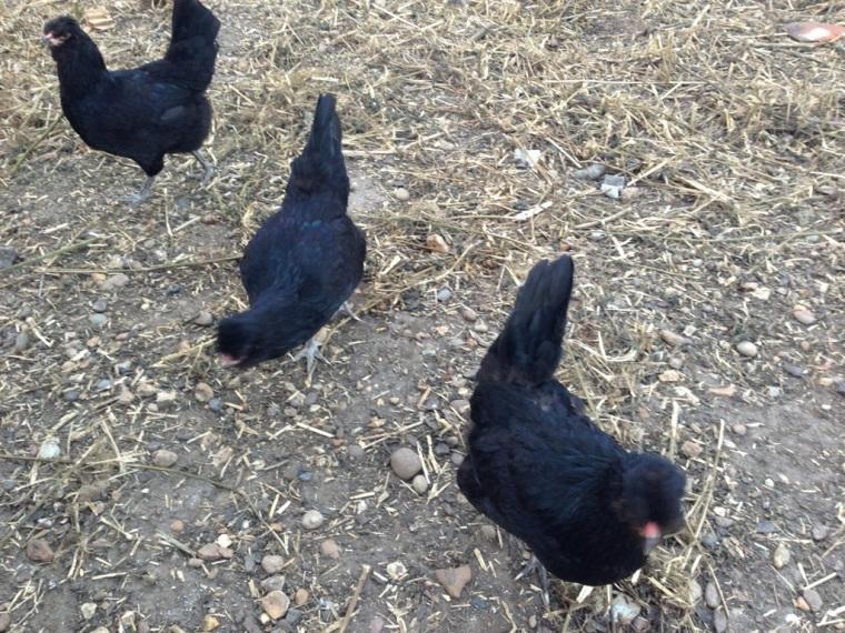 Our three ladies in black
