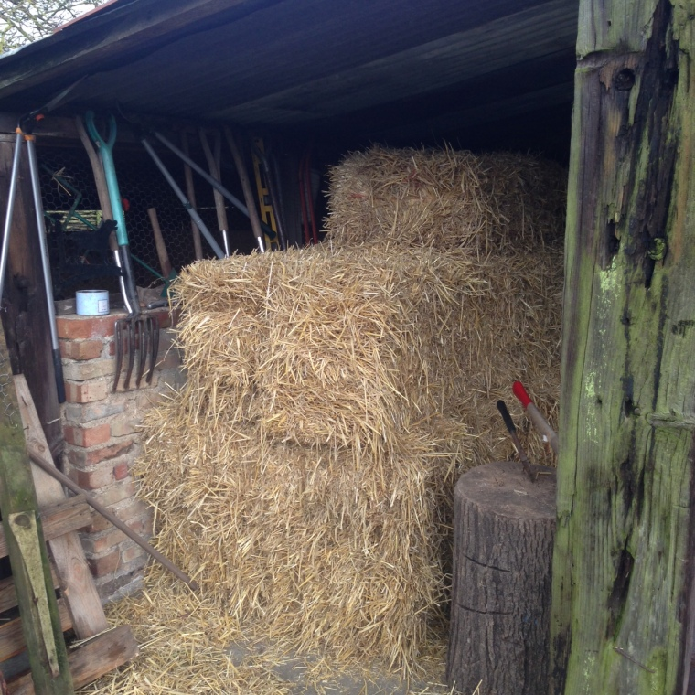 We took a delivery of fresh straw at the weekend – this winter being so wet, we've got through quite a bit